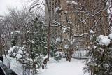 Garden View - 505 LaGuardia Place Coop