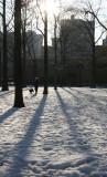Morning Walk in an Oak Tree Grove