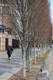 Jogging Paths & Oak Tree Stand