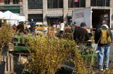 Farmers Market - Forsythia