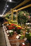 Flower Show - Prize Winners