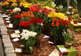 Flower Show - Spring Flowers