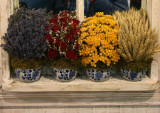 Flower Show - Arrangements