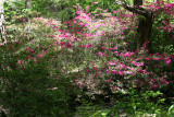 Azalea Pond in the Rambles