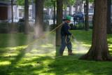 Spraying Oak Trees