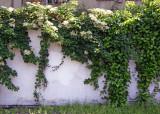 Sidewalk Garden Wall