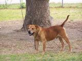 Max, Marilyn's dog