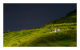 Lower Tote, Isle of Skye