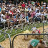 The Pig Race Crowd