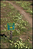 Skilpad walking trail starts here.