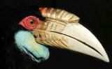 Hornbill, Malaysia