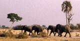 Selinda, Botswana