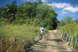 Crossing First Bridge, Moremi, Botswana, 2000
