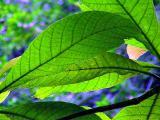 leaf12.jpg