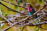 birds3.pb.jpg