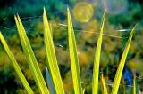 plants15.jpg