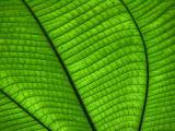 leaf18.jpg