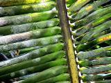 leaf19.jpg