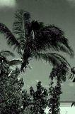Coco Island Maldives.jpg