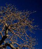 baobab5.jpg