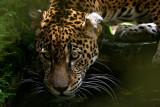 Honduran Zoo