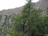 113 Col Brison Behind Tree.jpg