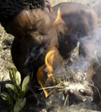bushman y fuego.jpg