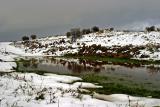 snowy Golan heights, Israel Feb 2006 øîú äâåìï