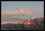 Hermon mountain and some birds.