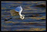 Low rider Egret
