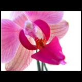 ... wonderful nature ...