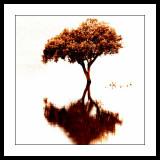 ... Tree ...