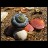...Blue sea snail with pink shells  ... lol