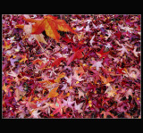 2003-11-16 ... Bed of leaves ...