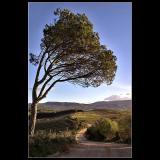 14.01.2006 ... Portuguese landscape ...