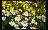 ... in a flower`s field!!!!