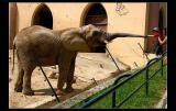 2006.04.25 ... At the zoo ...