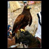 ... Lovely big bird !!!!