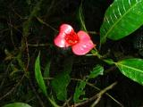 Monteverde flowers (read text)