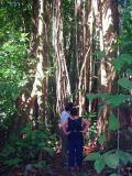 Rainforest ground