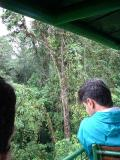 Rainforest aerial
