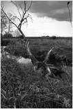 Dead Tree at Token Creek
