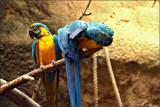 Macaws at the Zoo