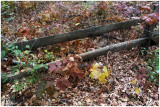 Fall #3