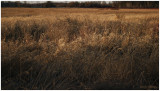 Dusk on the Marsh
