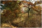 Fall #8
