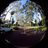 Fraser Avenue King's Park