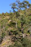 Bush scene north of Perth