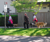 The Dog Walkers