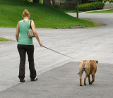 The Dog Owner